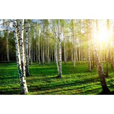 Spot The Trees